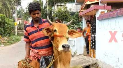Man wants loan against cow