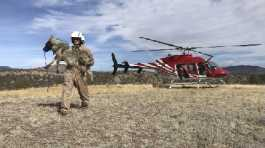 U.S. Fish and Wildlife Service biologist Maggie Dwire carries a Mexican gray wolf from a helicopter